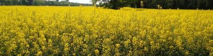 ENEA Grupo - Biomass